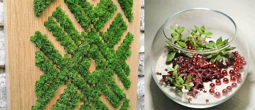 Красивейший эко декор живым мхом и кактусами эко гостиная