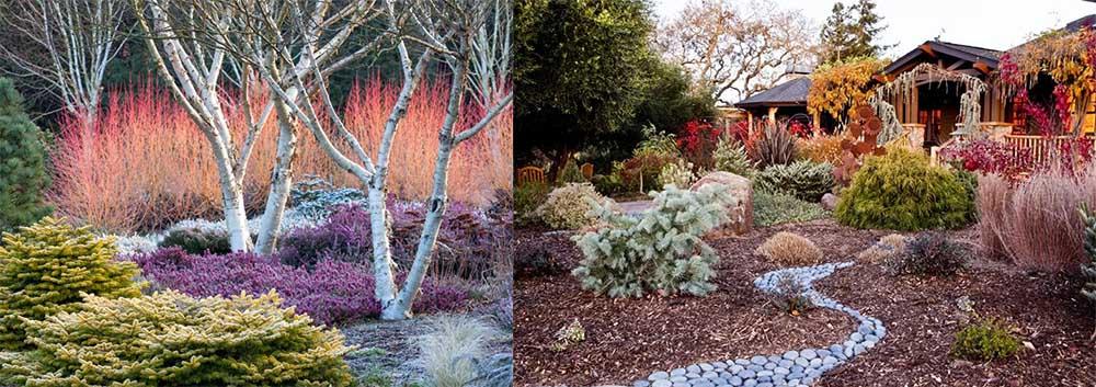 Зимний вид подбор растений которые смотрятся прекрасно зимой Ландшафтный дизайн 2018