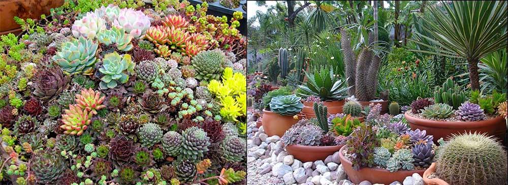 Суккуленты прекрасные садовые уголки с экзотическими кактусами Ландшафтный дизайн 2018