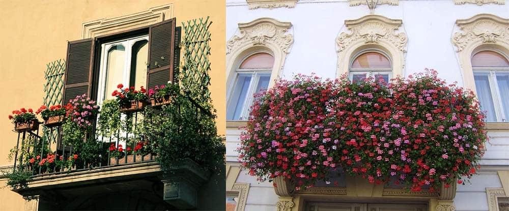 Цветы для балкона неустаревающая классика пышный декор озеленение дизайн балкона 2018
