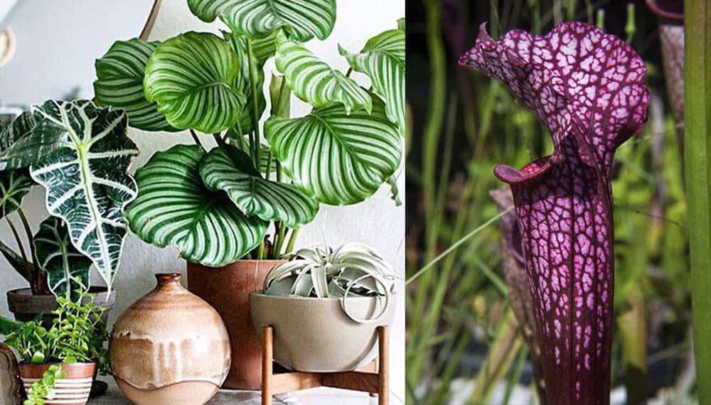 Растения с ярким узором новый супер-тренд Декор 2018