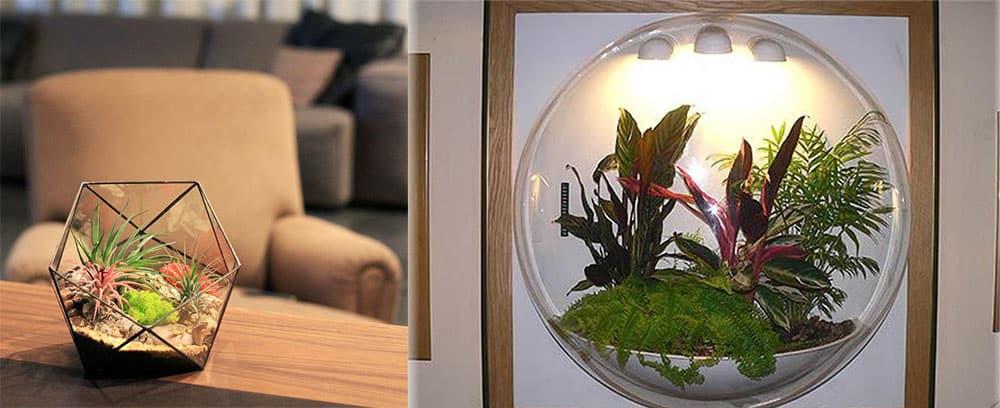 Флорариумы интересные растительные композиции в террариумах Кабинет 2018